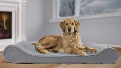 تصویر از خرید جای خواب سگ ارزان + 20 مدل زیبا، ارزان + عکس و قیمت روز